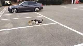 可愛い野良猫達 玉野市の王子ヶ岳