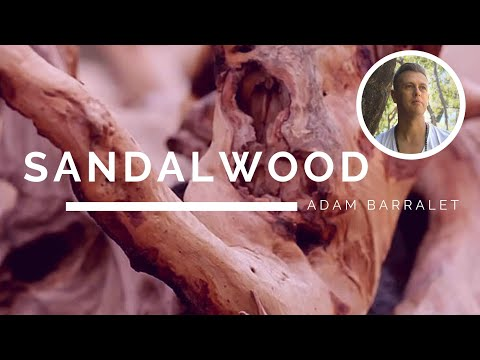Sandalwood - The Oil of Alignment