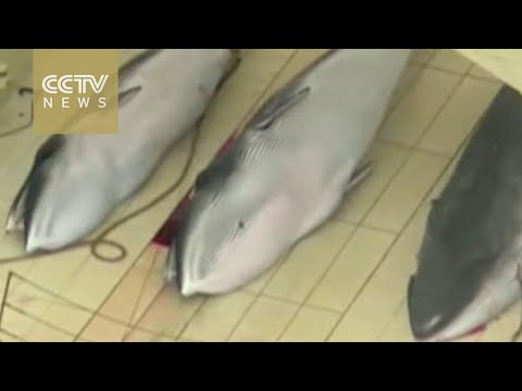New Zealand, Australia lead protest against whaling by Japan
