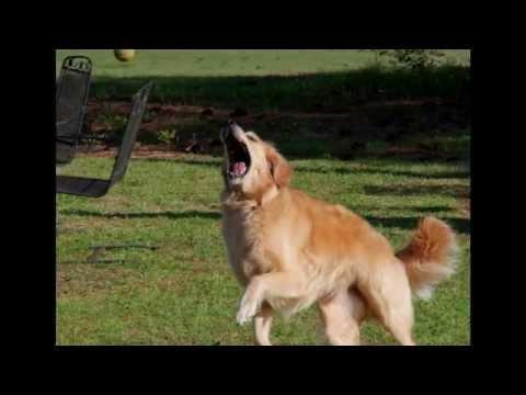 Beauford a South Carolina dog