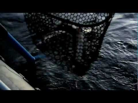 Mission Missouri - Fly Fishing the Missouri River
