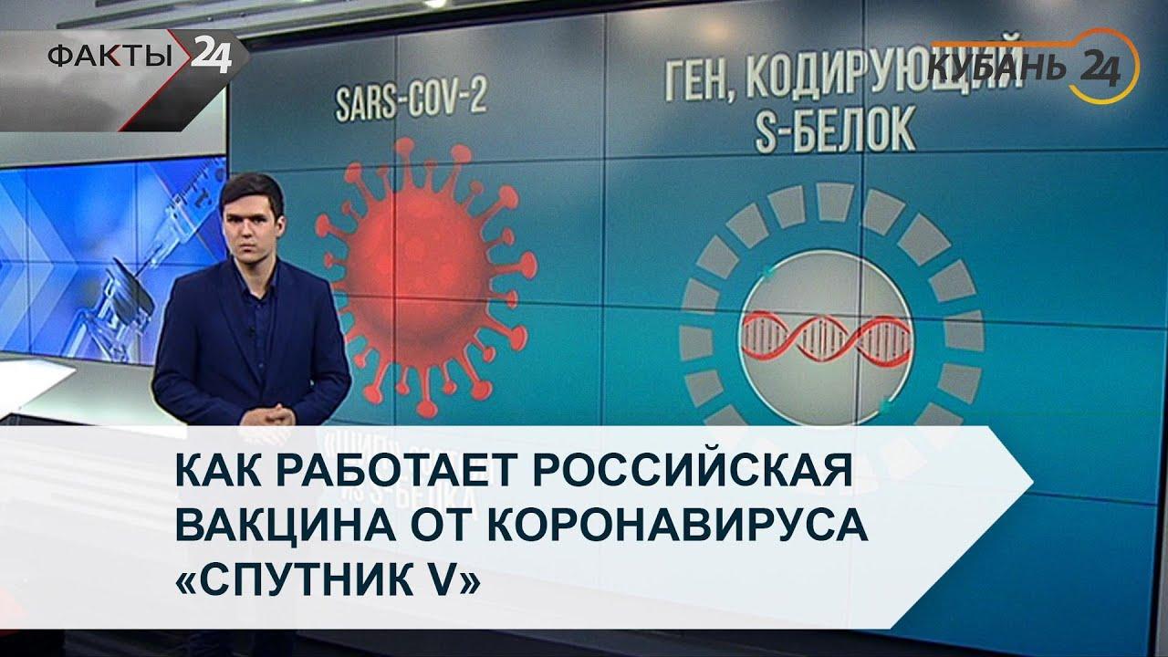 Как работает российская вакцина от коронавируса Спутник V