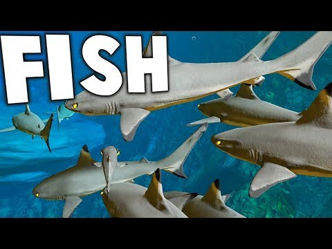 BEWARE THE NEW SHARKS! HUGE UPDATE! - Feed and Grow Fish Gameplay