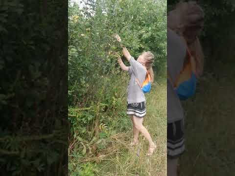 Рыбалка - Когда созреет вишня ловить на спелую