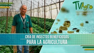 Cria de Insectos Beneficiosos para la Agricultura- TvAgro por Juan Gonzalo Angel
