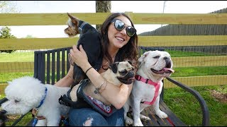 Sarah Ross - Doin' Just Fine (Dog Rescue Video)