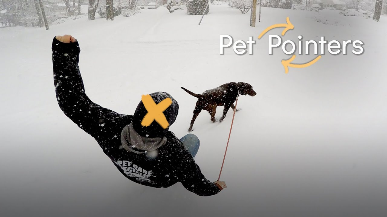 Walking Your Pet During Extreme Weather  | Pet Pointers
