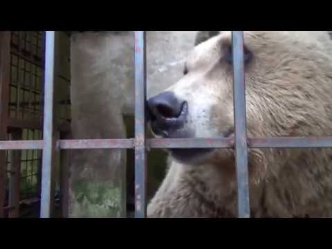 FOUR PAWS helps Europe's saddest bears in Albania
