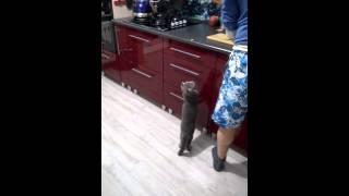 Коту обломилось