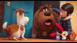 Тайная жизнь домашних животных (2016) трейлер