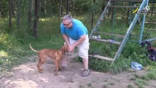 видео Собака встречает хозяина после армии!