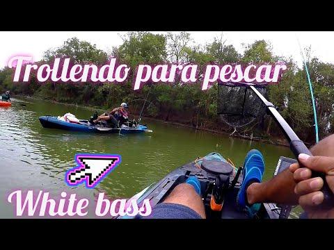 White Bass Fishing - Primer Pesca De La Temporada