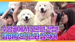 [TV 동물농장 레전드] '수암골 담벼락 인기스타, 삼식이' 풀버전 다시보기 I TV동물농장 (Animal …