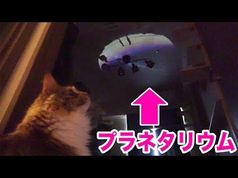 猫にプラネタリウム見せたらキャットウォークで大はしゃぎ!