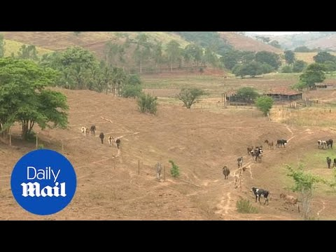 Brazil fears rise of global warming and continuous deforestation