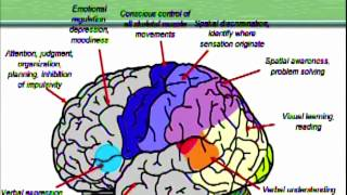 Becky Bingham: Brain maps, Part 1 Basic functions