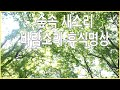 2 hours Sound of birds in the forest Relax meditation - Natural sounds - White noise
