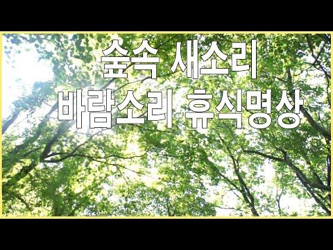 자연의소리 힐링사운드  숲속 새소리 바람소리 휴식명상 -2시간 연속 음악 사운드 백색소음 집중 공부 소리
