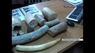 Из красноярского аэропорта пытались вывезти бивни мамонта возрастом 4,5 тыс. лет
