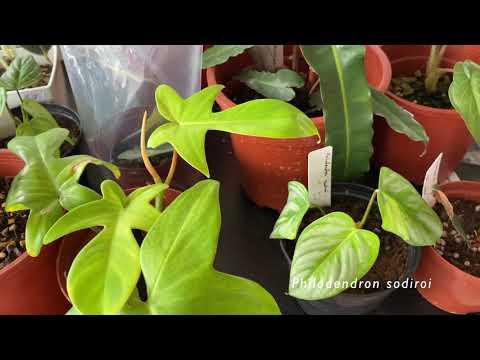 Gardener's Weekend Market | Singapore Plant Shopping!