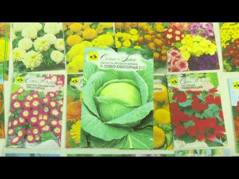 Капуста белокочанная для квашения и хранения | семкоюниор | семена | семко