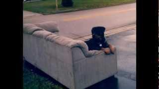 Rottweiler Tribute - Frisco 1998-2012