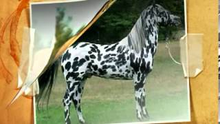 Top ten most beautiful horses