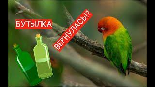 Реакция попугая НА бутылку ! Вторая ПОПЫТКА!!! Что ПРОИСХОДИТ ?Parrot Reaction To A BOTTLE !!!