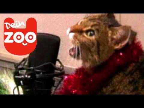 Frohe Weihnachten - Die Tiere singen mit dir