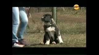 Защитникам бродячих собак