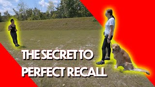 Use this tip to MASTER your Dog's Recall!