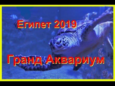 Гранд Аквариум в Хургаде.  Отдых в Египте 2019. Хургада 2019.  Рыбки красного моря.