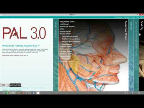 PAL 3.0 (Practice Anatomy Lab) - YouTube