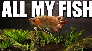 ALL MY AQUARIUMS - The king of…