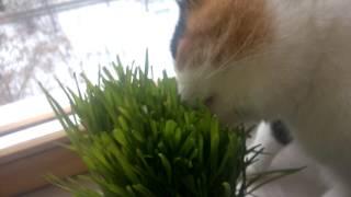 Муся ест траву