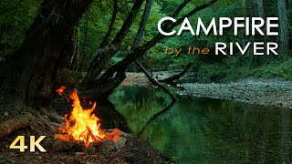 4K Campfire by the River - Relaxing Fireplace & Nature Sounds - Robin Birdsong  - UHD Video - 2160p thumbnail