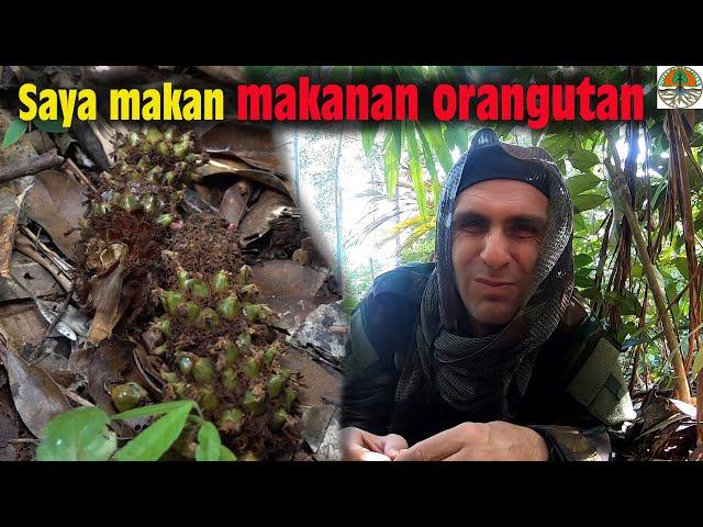 Je goûte la nourriture des ORANGS-OUTANS sauvages !