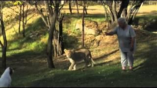Королева львов 3 серия 1 сезон.