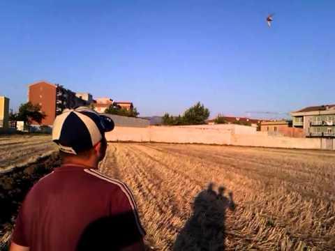 Aquilone ad Apricena, 18 Agosto 2012. Kite in Apricena Italy.