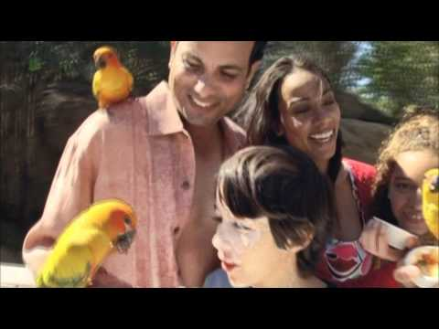 Discovery Cove - Promotional Video