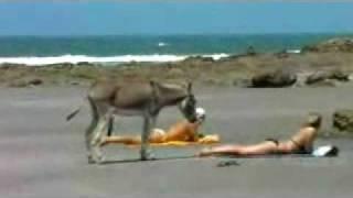 pakistan six Naughty Donkey - Video.flv