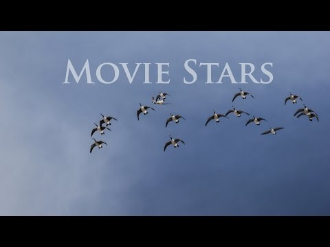 Nebraska Goose Hunting:  Movie Stars
