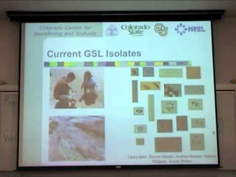 Biodiesel Production From Algae - Dr. Matthew Posewitz - CBC 2007