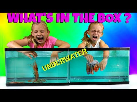 WHAT&39;S IN THE BOX CHALLENGE - UNDERWATER EDITION - Magic Box Toys Collector