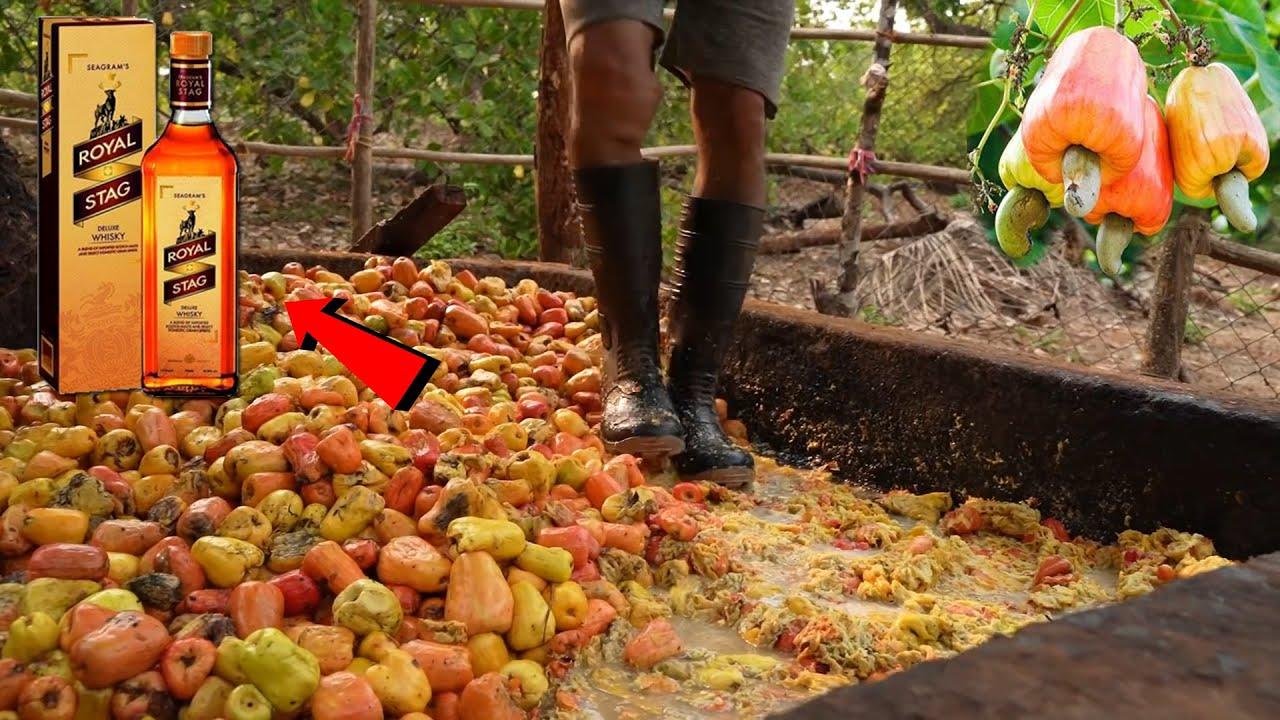 দেখুন কাজু বাদাম দিয়ে কিভাবে মদ তৈরি হয়? কি কারনে সবাই খেতে চাই ? Kaju and food Factory process