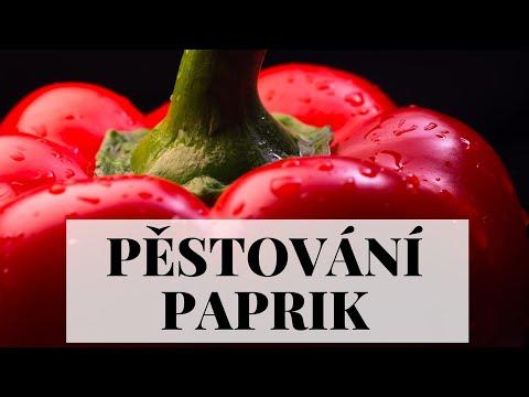 Pěstování paprik - ze semínka krok za krokem