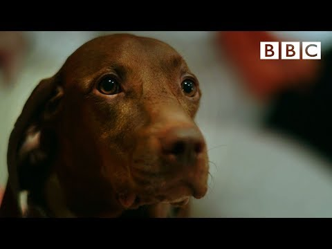 Can dogs tell the time?  | Inside the Animal Mind - BBC