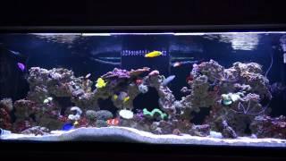 180 Gallon Fish Stock