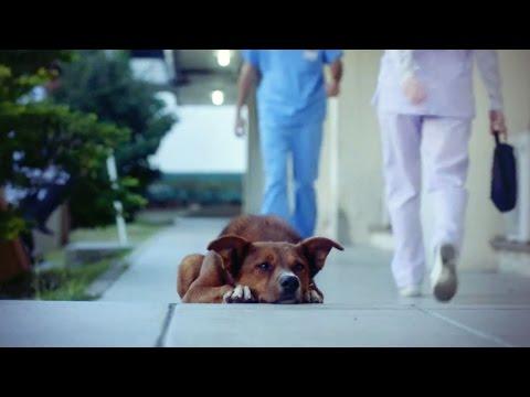 um-homem-&-seu-cachorro-the-man-&-the-dog