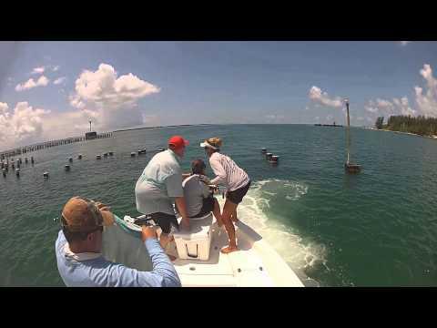Insane Goliath Grouper Battles In Boca Grande, Florida Fishing Charters